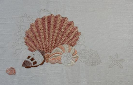 Seashells - 2017-06-04