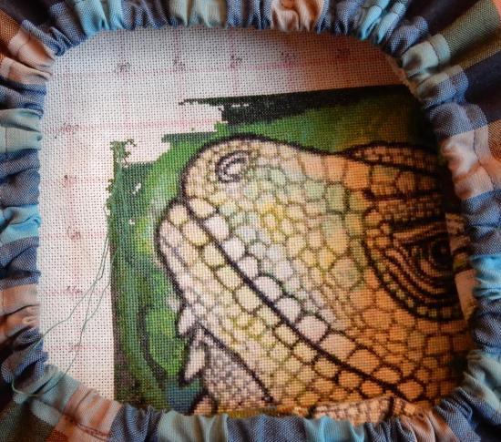Green Iguana - 2019-12-15